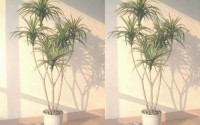 2-x-4-5ft-Yucca-Palms-Artificial-Trees-WITHOUT-POTS-66.jpg